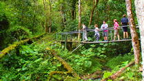 Cloud Forest Wildlife Hike, Boquete, Hiking & Camping