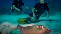 Afternoon & Night Dive in Bayahibe from Punta Cana -Small group in Caribbean Sea, Punta Cana, Other ...