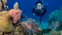 Bayahibe 3 Tank Diving with Lunch from Punta Cana (Small Group VIP Diving), Punta Cana, Other Water ...