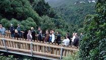 Otari Eco Trek - Half Day, Wellington, Hiking & Camping