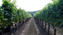 Fraser Valley Private Wine Tour and Bistro Lunch