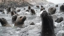 Swimming with Wild Sea Lions in Lima, Lima, Cultural Tours