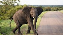 4-Day Kruger Experience with Lodge Accommodation, Johannesburg, Multi-day Tours