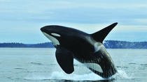 Seattle Whale Watching Tour with Transport, Seattle, Dolphin & Whale Watching