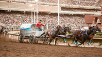 Die Calgary Stampede, Calgary, Sporting Events & Packages