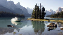 Jasper National Park Wildlife and Waterfalls Tour, Jasper, Half-day Tours