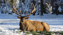 Jasper Winter Wildlife Search, Jasper, Seasonal Events