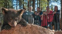Bearizona Drive-Thru Wildlife Park, Flagstaff, Rail Tours