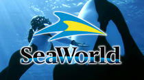 Miami to Orlando SeaWorld Theme Park Round-Trip, Miami, Theme Park Tickets & Tours