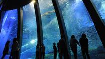 Yokohama Hakkeijima Sea Paradise Discount Pass, Yokohama, Theme Park Tickets & Tours