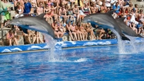 Keine Warteschlangen: Mallorca Marineland-Führung, Mallorca, Kid Friendly Tours & Activities