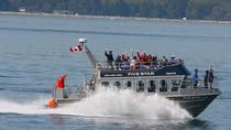 Whale-Watching Cruise with Expert Naturalists, Victoria, Dolphin & Whale Watching