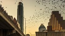Congress Ave Scavenger Hunt and Bat Tour, Austin, Self-guided Tours & Rentals