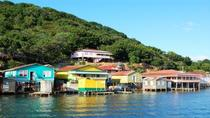 Roatan Shore Excursion: Mangrove Cruise, Roatan, Ports of Call Tours