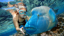 2-daagse combotour vanuit Cairns: Great Barrier Reef Cruise en Kuranda, Cairns & the Tropical ...