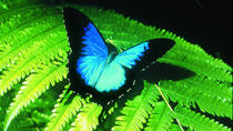 Australian Butterfly Sanctuary, Cairns & the Tropical North