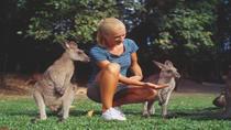 Wildlife Habitat Port Douglas, Port Douglas, null