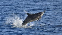 Dolphins encounter and BBQ on Benitiers Island, Port Louis, Swim with Dolphins