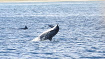 Dolphins Encounter and Whale Watching, Mauritius