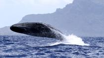 L'observation des baleines, Port Louis, Dolphin & Whale Watching