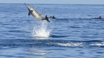 Whale and Dolphin Watching Private Boat Tour from Mauritius, Mauritius, Swim with Dolphins