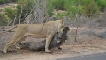Kruger National Park4days&3nights Tour, Johannesburg, 4WD, ATV & Off-Road Tours
