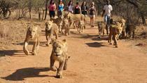 Lion Park Safari Adventure Tour, Johannesburg, 4WD, ATV & Off-Road Tours