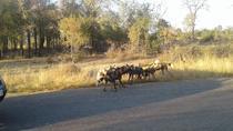 Pilanesberg&Sun city_Resort Safari Adventure