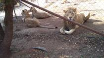 Pillanisburg SAFARI and lion Park Day Tour, Johannesburg, 4WD, ATV & Off-Road Tours