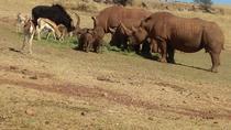 Pillanisburg SAFARI and lion Park Day Tour