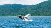 Juneau Shore Excursion: Mendenhall Glacier, Whale Watching and Salmon Bake, Juneau, Ports of Call ...