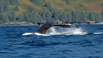 Juneau Shore Excursion: Whale-Watching Adventure, ジュノー
