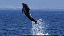 Icelandic Horse Riding and Express Whale Watching Tour from Reykjavik , Reykjavik, Dolphin & Whale...