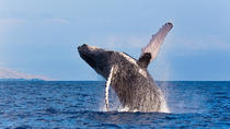 Reykjavik Shore Excursion: Whale-Watching Cruise, Reykjavik, Ports of Call Tours
