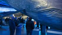 Reykjavik Whale-Watching Tour and Whales of Iceland Exhibition Visit, Reykjavik, Dolphin & Whale ...