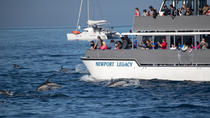 Whale-Watching Cruise from Newport Beach, Los Angeles, Dolphin & Whale Watching