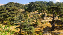 Cedars of Lebanon, Qozhaya, and Bcharre Day Trip from Beirut