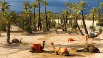 Camel Ride In Marrakech including Hotel-Pick up and Drop-off, Marrakech, Nature & Wildlife