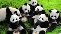 4-Night Soul of Xi'an and Chengdu Tour by Air Including Panda Visit, Xian, null