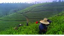 Experience Chengdu: Private Tea-Making Tour of Mengdingshan Tea Plantation, Chengdu, null