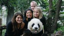 Half-Day Chengdu Panda Breeding Center Tour with Optional Baby Panda Holding, Chengdu, Nature & ...