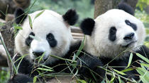 Half-Day Chengdu Panda Breeding Center Tour with Optional Baby Panda Holding, Chengdu