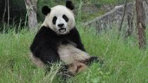 Private Custom Chengdu Sightseeing Tour, Chengdu, Full-day Tours