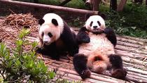Private Tour: Chengdu Panda Base und Leshan Grand Buddha, Chengdu, Private Tagesausflüge