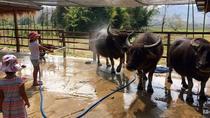 Laos Buffalo Dairy Experience & Kuang Si Waterfalls Half Day Tour!, Luang Prabang, 4WD, ATV &...