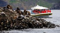 3-Hour Bruny Island Cruise from Adventure Bay, Hobart, Day Cruises