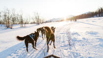 Dog Sledding in the Arctic, Tromso, Ski & Snow