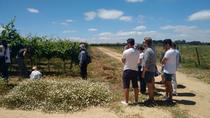 Alentejo Wine Tour from Lisbon Including Lunch, Lisbon, Day Trips