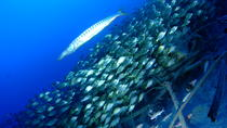Day trip for certified divers with two dives, Gran Canaria, Day Trips
