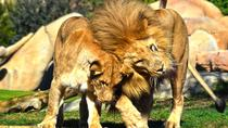 Bioparc Valencia Skip the Line Admission Ticket , Valencia, Zoo Tickets & Passes